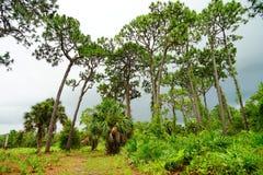 Florida largo plant garden. Tall tree in largo plant garden, Florida, USA Stock Photos