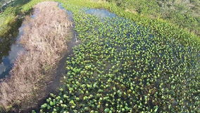 Florida-Lerche und -Sumpfgebiet stock footage