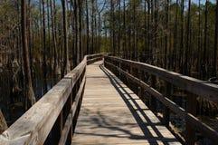 Florida mangroves Royalty Free Stock Image