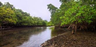 Florida Mangroves at Dusk Stock Images