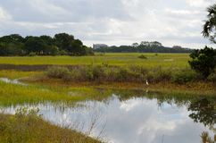 Florida marsh land Royalty Free Stock Image