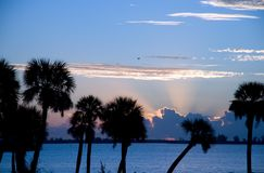 Florida Morning. Early tropical morning palm trees and sunrise over Indian River on Florida's east coast Royalty Free Stock Image