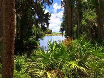 Florida naturale Immagine Stock