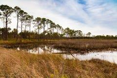 Florida nature preserve Royalty Free Stock Photography