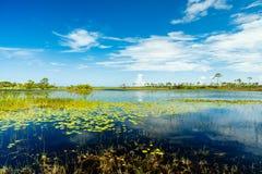 Florida Nature Preserve Royalty Free Stock Photos