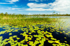 Florida Nature Preserve Stock Images