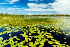 Florida natursylt Arkivbilder