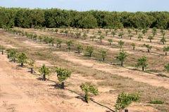 Florida-Orangen-Produktion lizenzfreies stockbild