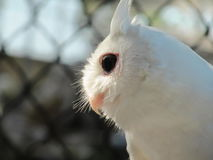 Florida Owl. Punta Gorda Florida royalty free stock photography