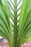 Florida palm Royalty Free Stock Photography