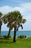 Florida Palm Tree. Palm Tree, Atlantic Ocean Backdrop Stock Photo