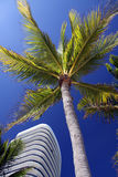 Florida Palm Tree and Condo Royalty Free Stock Images