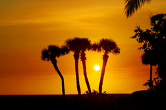 Florida Palm tree sihouettes Royalty Free Stock Image