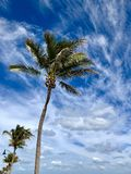 Florida palm trees. Floridian palm tree against the blue and cloudy sky Royalty Free Stock Photography