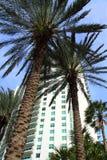 Florida-Palmen und Gebäude Lizenzfreie Stockfotos