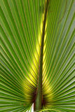 Florida Palmetto Background Stock Images