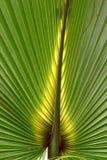 Florida Palmetto Background Stock Images