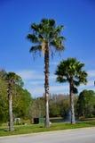 Florida palmträd och väg Arkivfoton