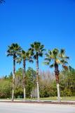 Florida palmträd och väg Royaltyfria Foton