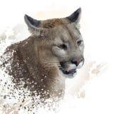 Florida panther or cougar painting. Florida panther or cougar digital painting royalty free illustration