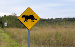 Florida Panther Crossing Royalty Free Stock Photography