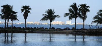 Florida park with a building background Royalty Free Stock Photography