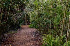 Florida-Parkspur Stockfotografie