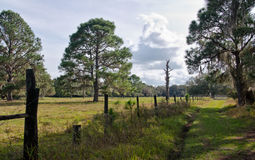 Florida pasture Royalty Free Stock Photos
