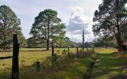 Florida pasture. A lush, green pasture in Florida royalty free stock photos