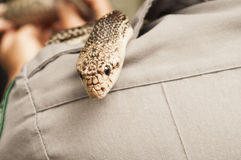 Florida Pine Snake Royalty Free Stock Photography