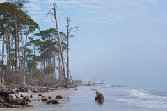 Florida pines next to ocean with fog rolling in royalty free stock photos