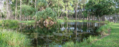 Florida Pond. A panoramic photo of a small pond in Florida Stock Photos