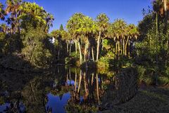 Florida pond, garden area. Water reflection of garden and palm trees central Florida Stock Photography
