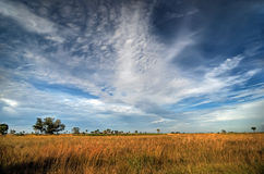 Florida prairie. Kissimmee Prairie Preserve State Park, Florida royalty free stock photography