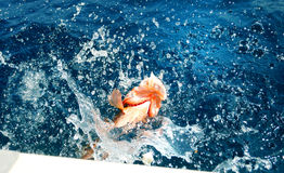 Florida Red Grouper. Florida Red Group caught on fishing trip royalty free stock photography