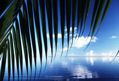 Florida Reflections. Palms, ripples and blue sky in the Florida Keys Stock Images