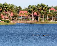 Florida Resort. In a tropical environment, focus on the ducks stock image