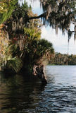 Florida River Style. Original photo of a southwest florida river royalty free stock image