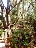 Florida& x27; s Moerasland Stock Afbeeldingen