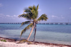 Florida's relaxing beaches Royalty Free Stock Photography