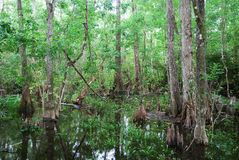 Florida's Swamp Stock Photo