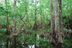 florida s swamp arkivfoto