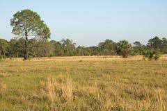 Florida scheuert Lebensraum am See Kissimmee-Nationalpark lizenzfreies stockfoto