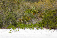 Florida scrub Royalty Free Stock Photo