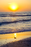 florida solnedgång Royaltyfri Fotografi