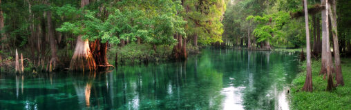 Florida spring-fed river panorama. Panorama of Ichetucknee Springs at sunrise, a beautiful spring-fed river in Florida stock image