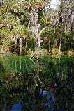 Florida spring wtih trees reflecting in the water Royalty Free Stock Photo
