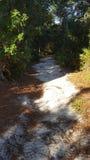 Florida-Spur Lizenzfreies Stockbild