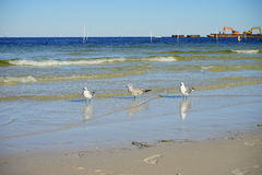 Free Florida St Petersburg Beach: Bird Resting Stock Photos - 79704213