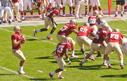 Florida State Seminoles Quarterback in Action Stock Images